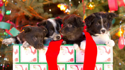 12 Dogs of Christmas: Great Puppy Rescue Trailer