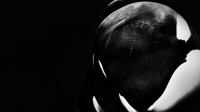 Blackfish Trailer