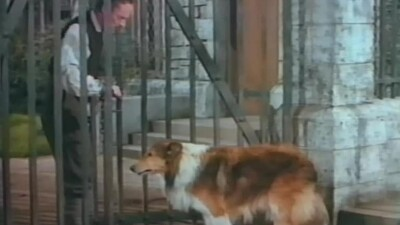 Challenge to Lassie Trailer