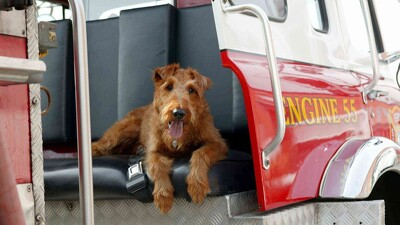 Firehouse Dog Trailer
