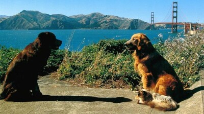 Homeward Bound II: Lost in San Francisco Trailer