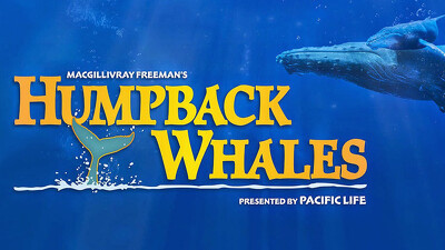 Humpback Whales Trailer