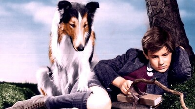 Lassie Come Home Trailer