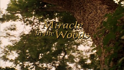 Miracle in the Woods Trailer