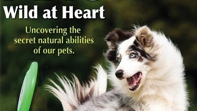 Pets: Wild at Heart Episode 1 Trailer