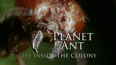 Planet Ant: Life Inside The Colony Trailer