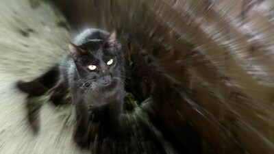 The Black Cat Trailer