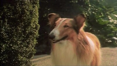 The Magic of Lassie Trailer