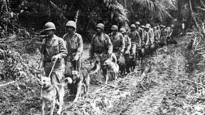 War Dogs of the Pacific Trailer