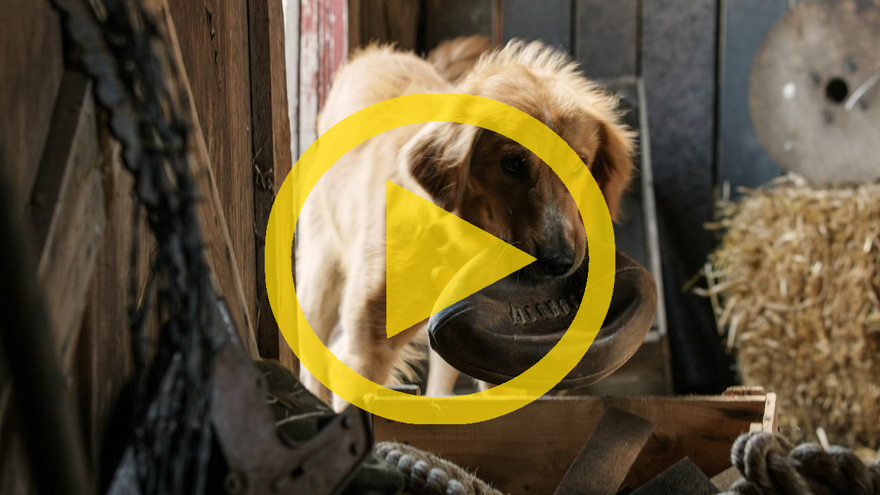 Full Movie Of A Dog S Purpose Online