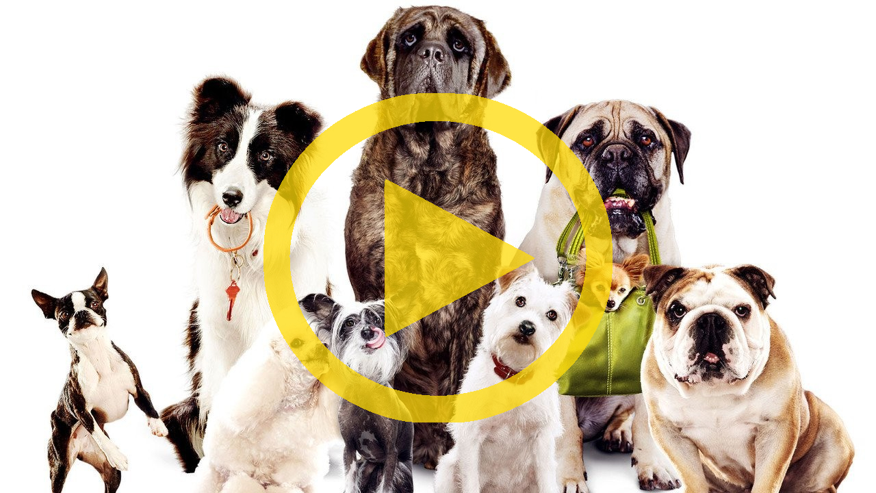 Watch Hotel For Dogs Full Movie