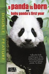 A Panda Is Born / Baby Panda's First Year Trailer