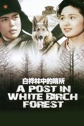 A Post in White Birch Forest Trailer