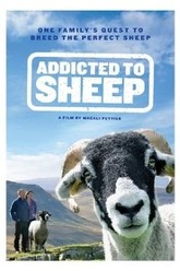 Addicted to Sheep Trailer