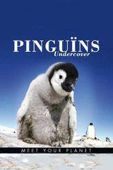 BBC Earth - Pinguins Undercover Trailer