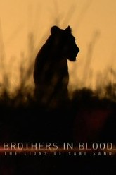 Brothers in Blood: The Lions of Sabi Sand Trailer