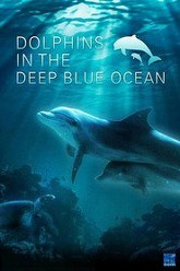 Dolphins in the Deep Blue Ocean Trailer