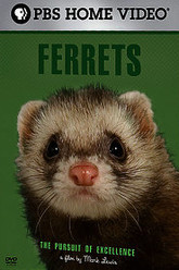 Ferrets: The Pursuit of Excellence Trailer
