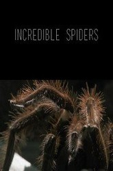 Incredible Spiders Trailer