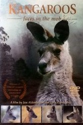 Kangaroos: Faces in the Mob Trailer