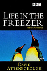 Life in the Freezer Trailer