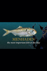 Menhaden: The Most Important Fish in the Bay Trailer