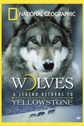 National Geographic - Wolves, A Legend Returns to Yellowstone Trailer