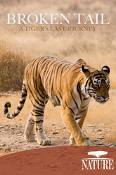 Nature: Broken Tail A Tiger's Last Journey Trailer