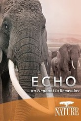 Nature: Echo An Elephant to Remember Trailer