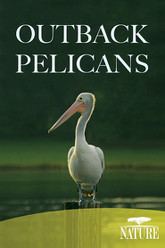 Outback Pelicans Trailer