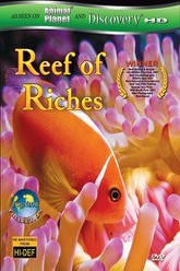 Reef of Riches Trailer