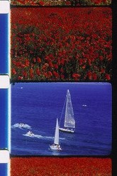 Sailboats and Poppies Trailer