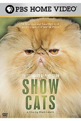 Standard of Perfection: Show Cats Trailer