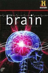 The Brain Trailer