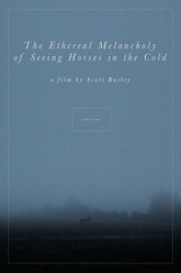 The Ethereal Melancholy of Seeing Horses in the Cold Trailer