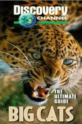 The Ultimate Guide: Big Cats Trailer