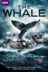 The Whale Trailer