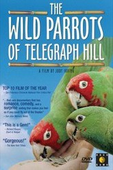 The Wild Parrots of Telegraph Hill Trailer
