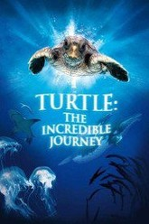 Turtle: The Incredible Journey Trailer