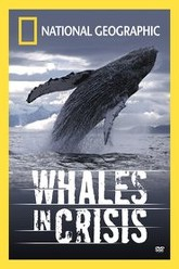Whales in Crisis Trailer