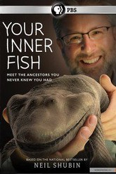 Your Inner Fish Trailer