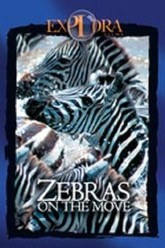 Zebras on the move Trailer